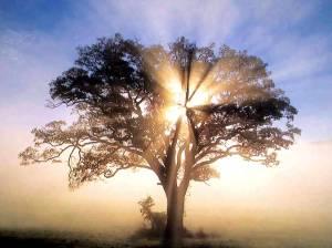 b2387-oak_tree
